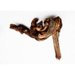 Amazon Driftwood - 3